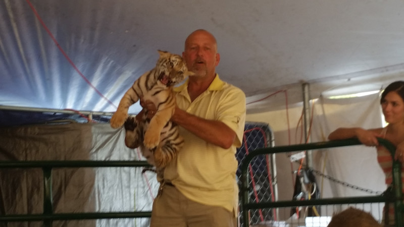 Tim Stark holds up a tiger during Tiger Baby Playtime.